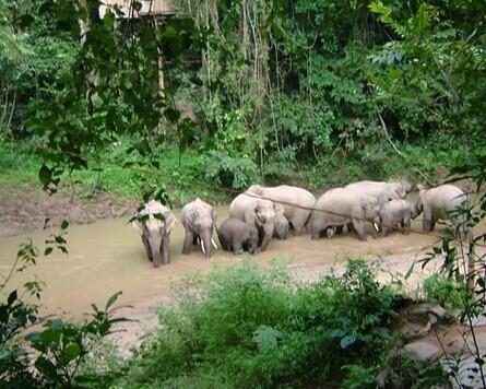 西双版纳亚博体育下载网址小包团|勐仑植物园+傣族园+野象谷双飞3天2晚游